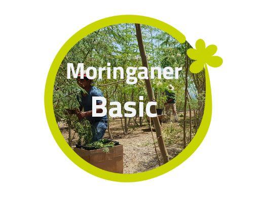 Moringaner - Basic, ohne Bäume